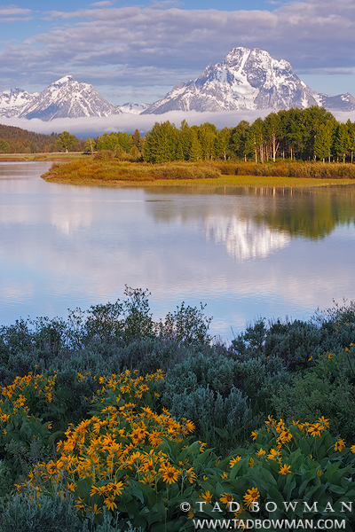 Grand Teton Photographs,Mount Moran Photos,Oxbow Bend photos, Teton Wildflowers images,grand teton national park, photo