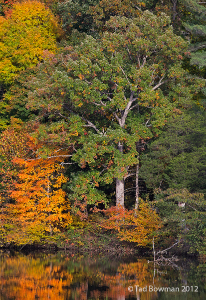 Tennessee images,Norris Lake photos,reflections, tree,trees,foliage,fall pictures,autumn,autumnal,color,colorful, photo