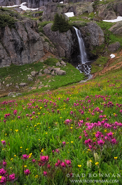 Indian Paintbrush, Colorado waterfall photos, Waterfall photograph,Image,Waterfall pictures,Wildflowers, photo