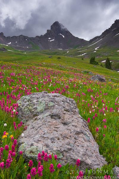 Wetterhorn Peak photographs,Indian Paintbrush mountain pictures,Colorado wildflowers photos,Wetterhorn Peak Photos,images, photo
