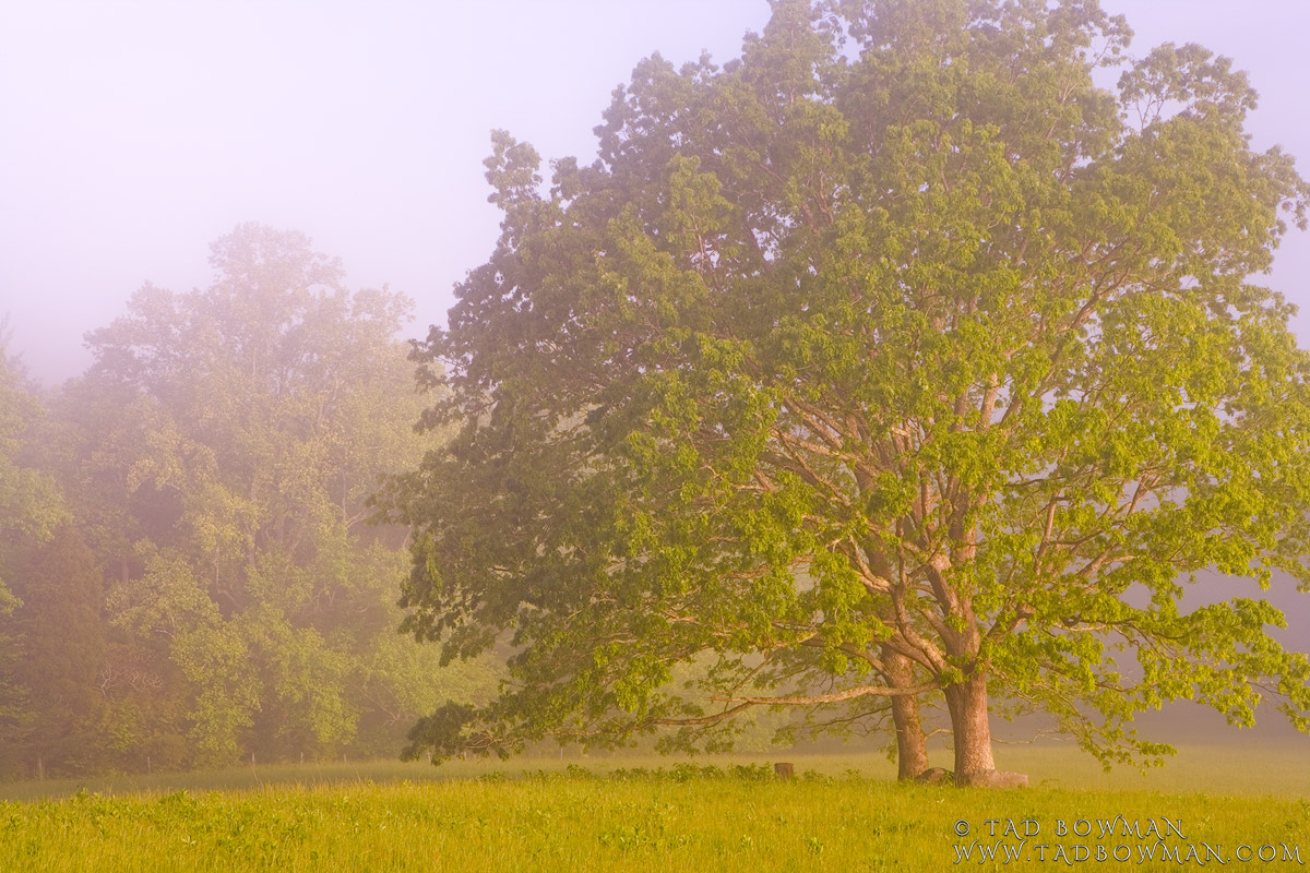 Cades Cove photos,smokey mountains,Foggy Trees photo, Forests pictures,Smoky Mountains images, photo