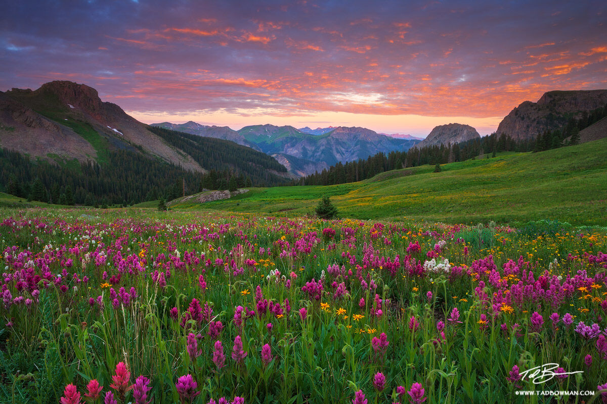 Colorado wildflower photographs, mountain picture,mountains pictures,Colorado Mountains,Uncompahgre photos,Mountain Sunrise image, photo