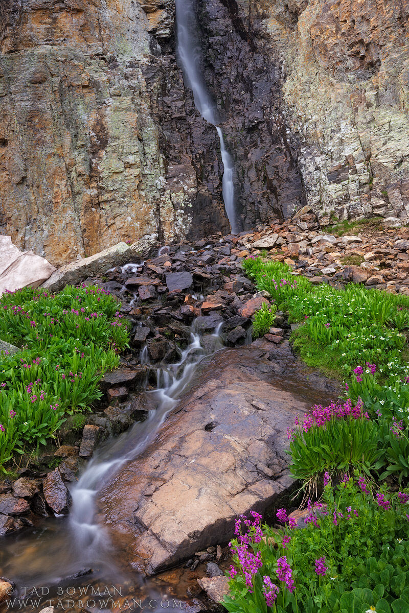 Colorado, waterfall picture, waterfall pictures, Parry Primrose wildflower photo, Mountain wildflowe, photo