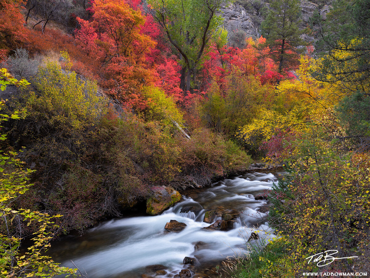 Idaho, Idaho photo,Idaho streams,fall colors, autumn picture,creek,river,calm,autumn, fall, colorful,autumn image, Idaho fall photos, Idaho fall photography, Idaho Fall pictures,red, orange, yellow, photo