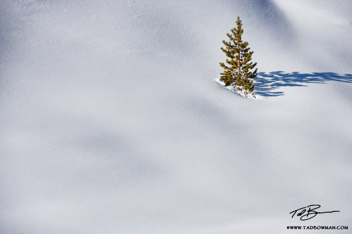 This snowy Colorado photo depicts a lone tree situated in deep snow in the Gore Range