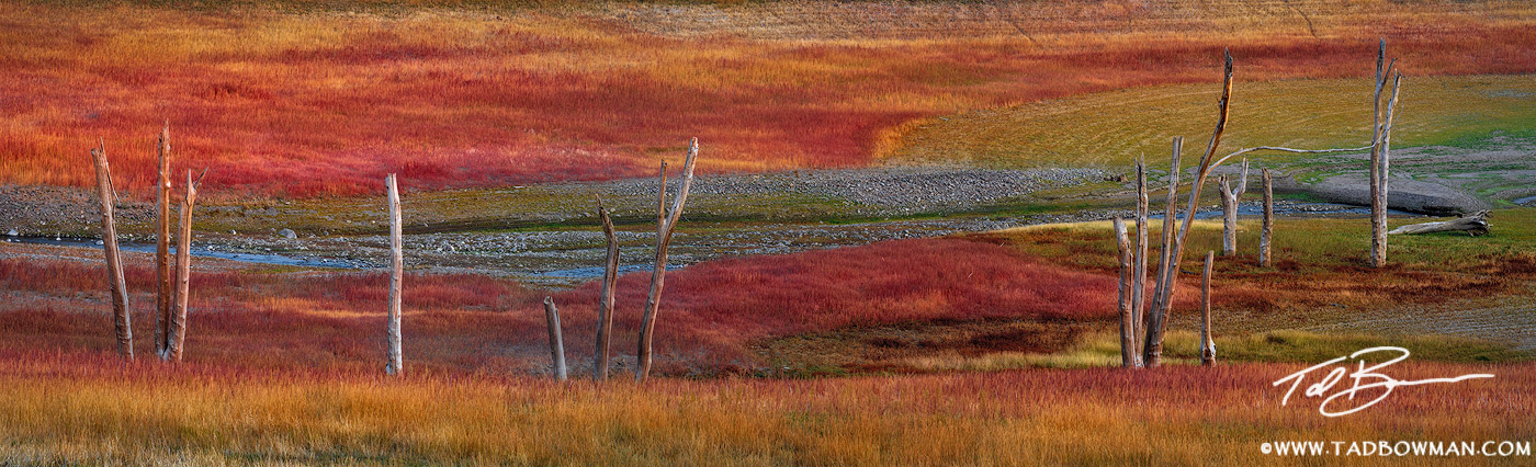 This Colorado fall photo depicts dead tree trunks lining a stream with red grass surrounding it.