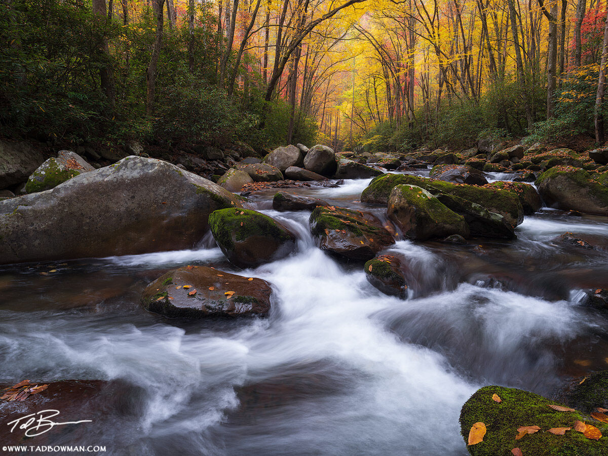 This Smoky Mountains photo depicts the big creek stream flowing in the foreground with a colorful fall canopy in the background...