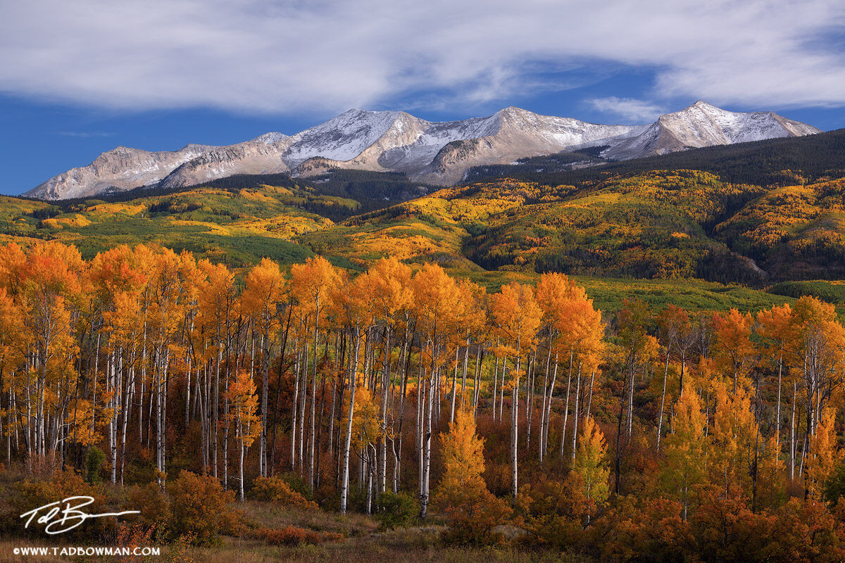 This Colorado fall photograph depicts late afternoon with a layer of snow on East Beckwith Mountain and gold aspen trees in the...