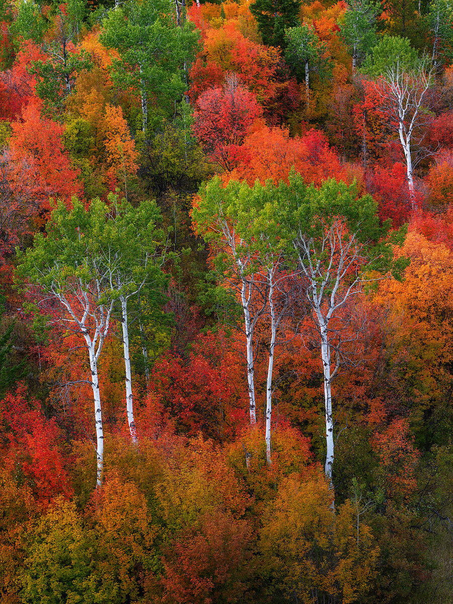 This Idaho autumn picture depicts a multitude of fall colors including maple, oak, and aspen trees.