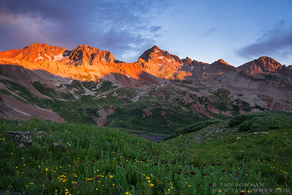 Colorado, Colorado Mountain Photos, Gladstone Peak, Wilson Peak, Mount Wilson, San Juan National Forest, Sunrise, orange, flower,flowers,wildflowers,wildflower,summer,images,pictures,mountain,mountain, photo