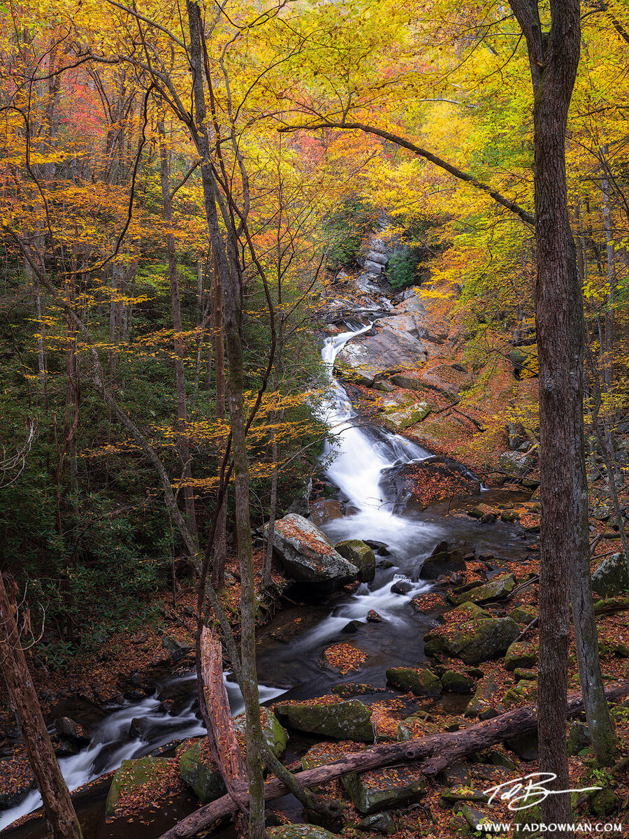 This Smoky Mountains photo depicts vibrant fall foliage surrounding a stream