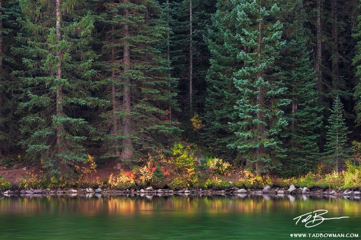 Colorado Pine Tree photos,Maroon Lake image,reflections,Autumn picture,Pine Tree Forest pictures,Colorado Fall colors, photo