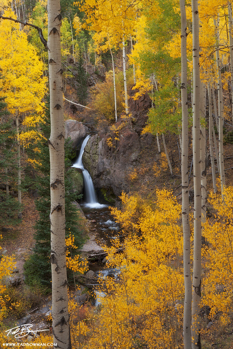 This Colorado Fall photo depicts Nellie Creek Falls surrounded by gold aspen trees in the San Juan Mountains