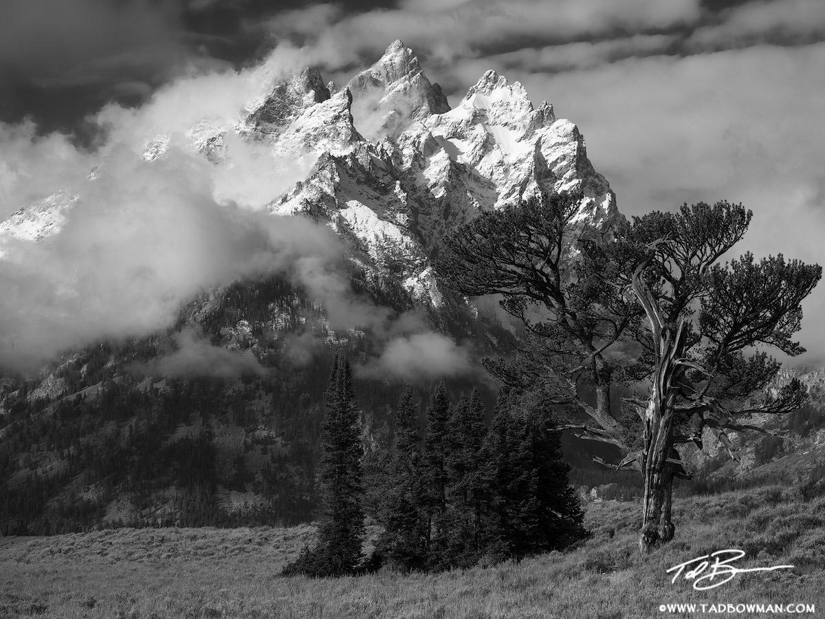 Grand Teton Photographs,Old Patriarch Photos,Old Patriarch tree image,tetons,Grand Teton National Park photos, Old Patriarch photos, Wyoming, Grand Teton National Park, Black and White, Grand Tetons, , photo