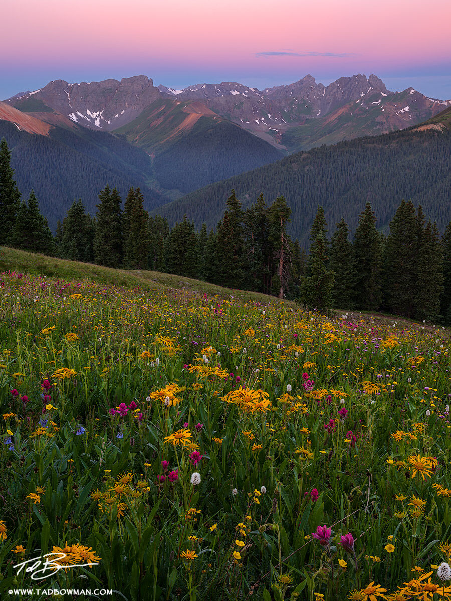 This Colorado mountain photo depicts pink predawn light over the San Juan Mountains with a foreground of wildflowers.