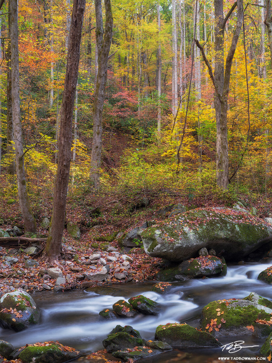 Tennessee, Fall, Autumn, Fall Foliage, Fall Colors, Great Smoky Mountains National Park, Smoky Mountains Photos, Smokies, Smoky Mountains Fall photos, River, Rivers, Stream, Streams, water, smokey, photo
