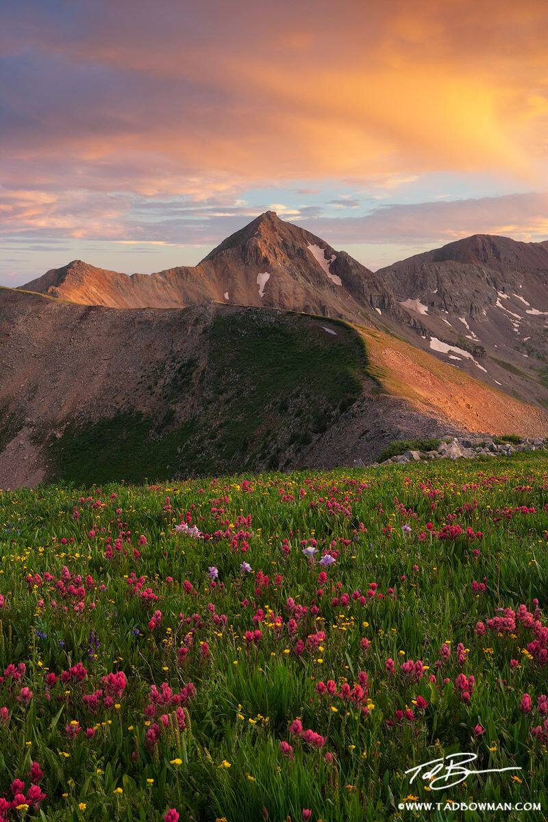 Colorado image,Indian Paintbrush, Mountain Photos, San Juan Mountains, Flowers, Sunset, La Plata Mountains photos,Diorite peak pictures, photo