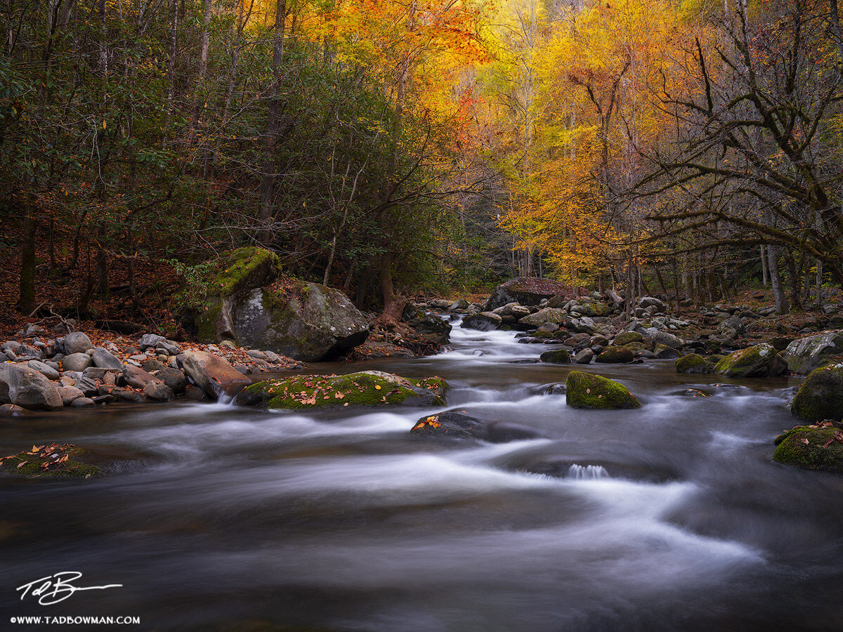 Tennessee, Fall, Autumn, Fall Foliage, Fall Colors, Great Smoky Mountains National Park, Smoky Mountains Photos, Smokies, Smoky Mountains Fall photos, River, Rivers, Stream, Streams, water, yellow, photo