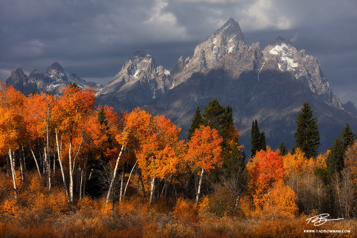 Wyoming,Grand Teton Photos,Grand Teton National Park,Fall Foliage, Fall Colors, Autumn,Autumnal,gold,stormy,clouds,cloudy,Grand Teton National Park Pictures, photo