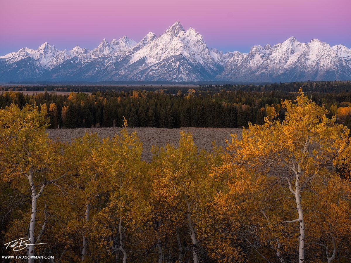 Wyoming, Grand Teton National Park Photos, Grand Tetons, Grand Tetons Photos, snow, snowy, aspens, aspen trees, sunrise, Grand Teton National Park, gold, orange, pink, fall, autumn, Grand Teton Fall p, photo