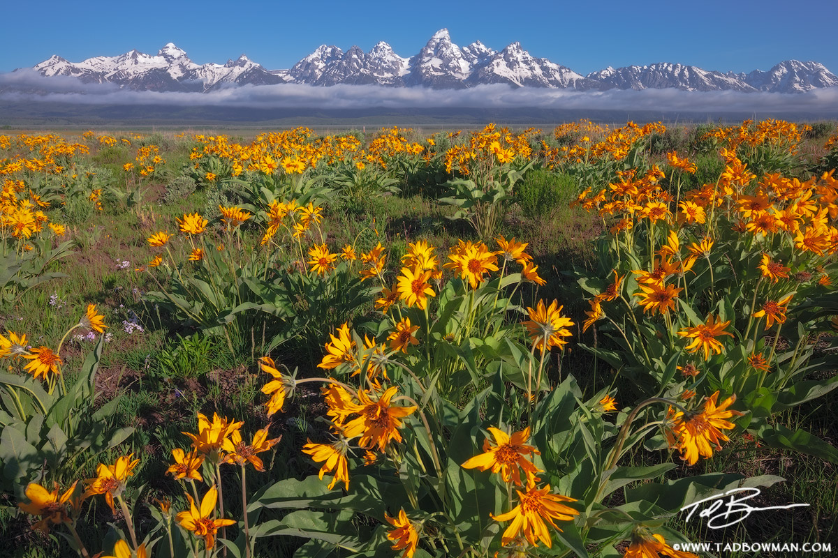 Grand Tetons photos,Tetons pictures,national park image,Wildflower pictures,Spring,Scenic,Inspirational