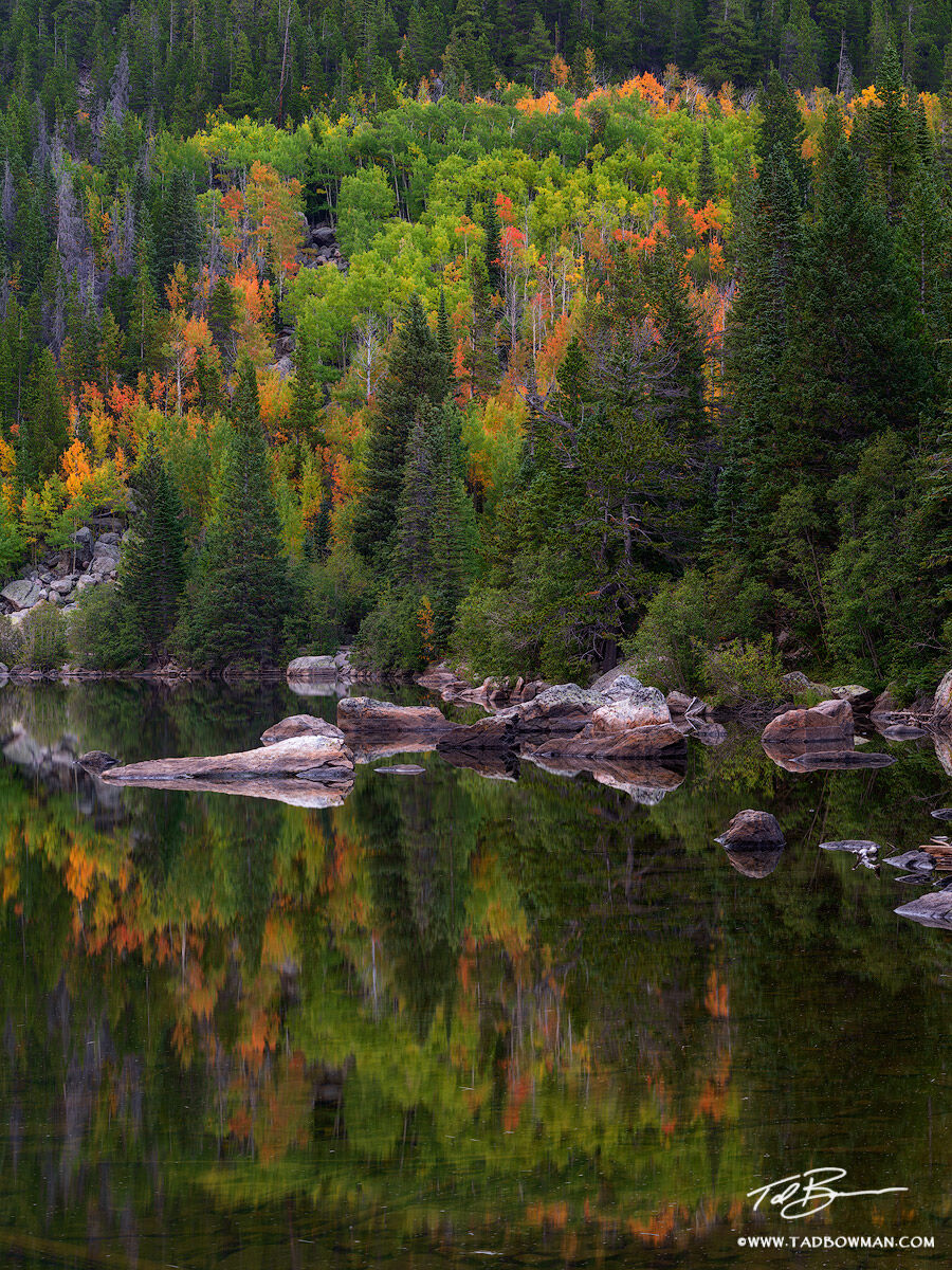 This Colorado fall photo depicts pine trees and aspen trees that are in various stages of color transition reflecting off a lake...